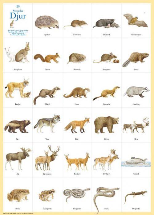 Poster Zweedse zoogdieren