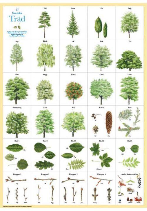Zweedse bomen poster