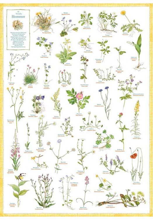 Zweedse planten poster