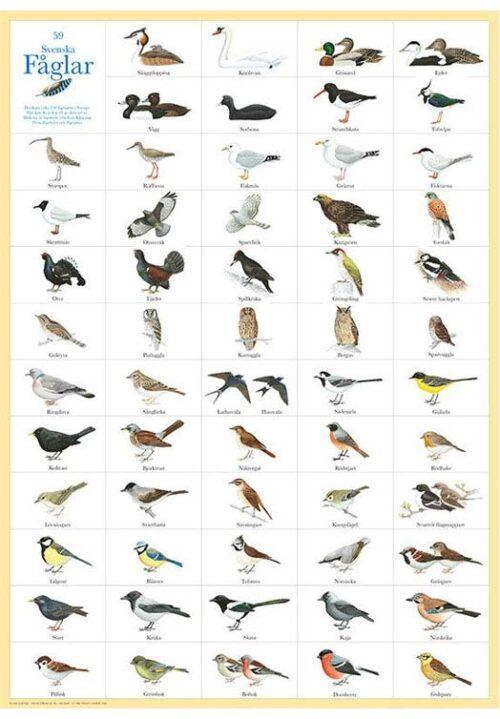 Zweedse vogels poster