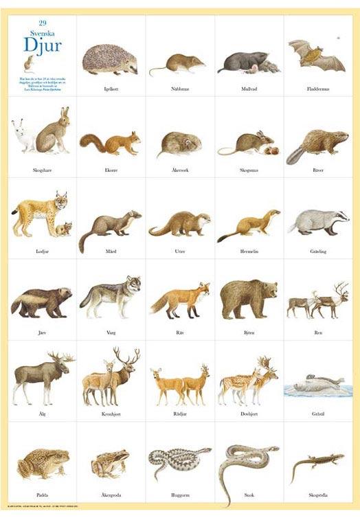 Zweedse zoogdieren poster
